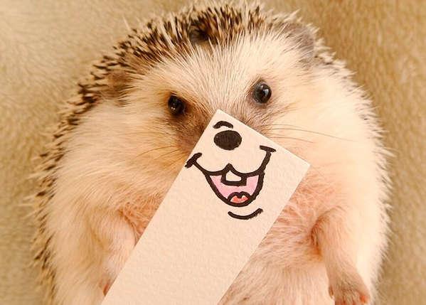 Marutaro 可爱的刺猬幽默表情画报1