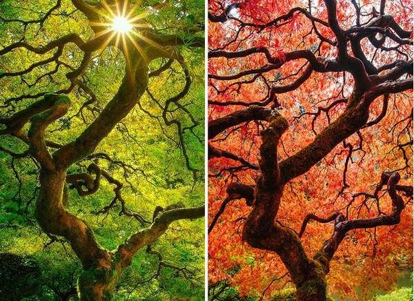 绿色盎然与色彩斑斓的季节变迁