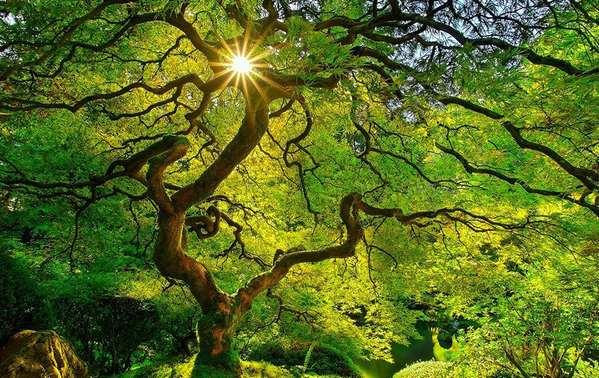 绿色盎然与色彩斑斓的季节变迁3