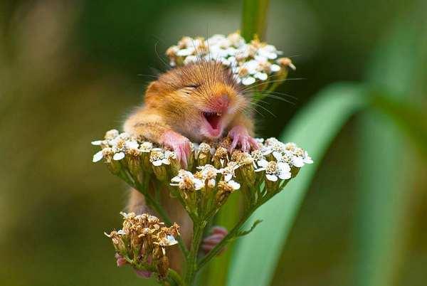 小野鼠的快乐生活图集