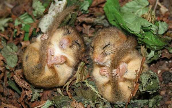 小野鼠的快乐生活图集1