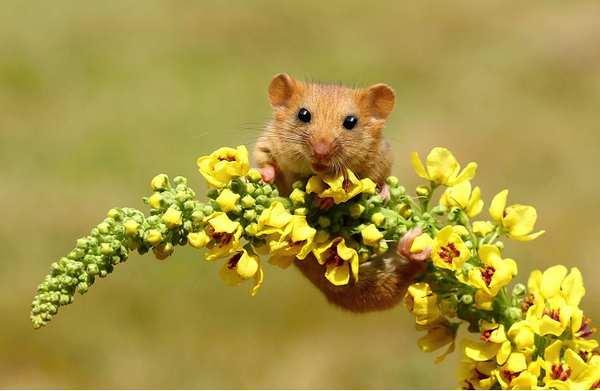 小野鼠的快乐生活图集3