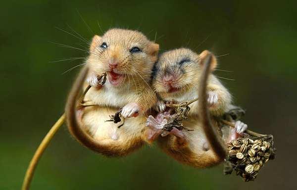 小野鼠的快乐生活图集4