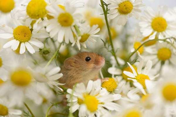 小野鼠的快乐生活图集5