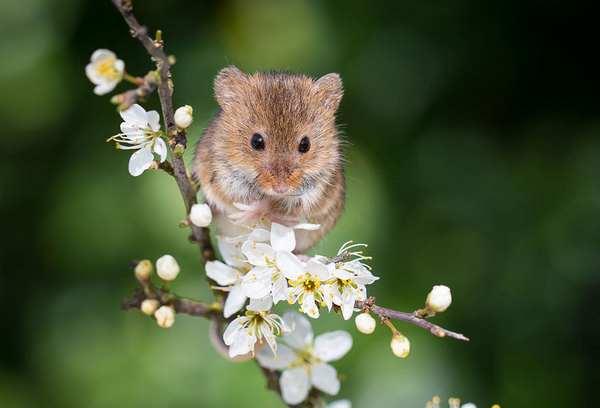 小野鼠的快乐生活图集6