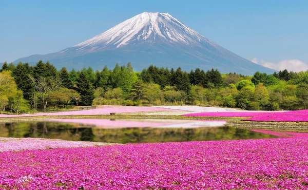 地球上秋天最美的22个风景区-日本Hitsujiyama公园