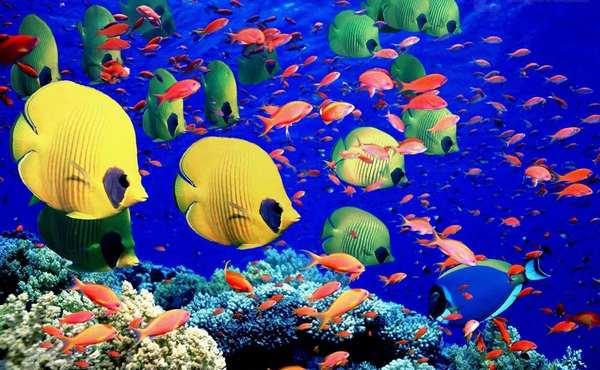 地球上秋天最美的22个风景区,澳大利亚大堡礁