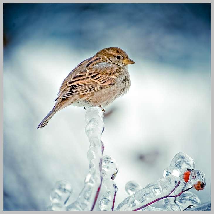 高清动物图片-Frozen beauty