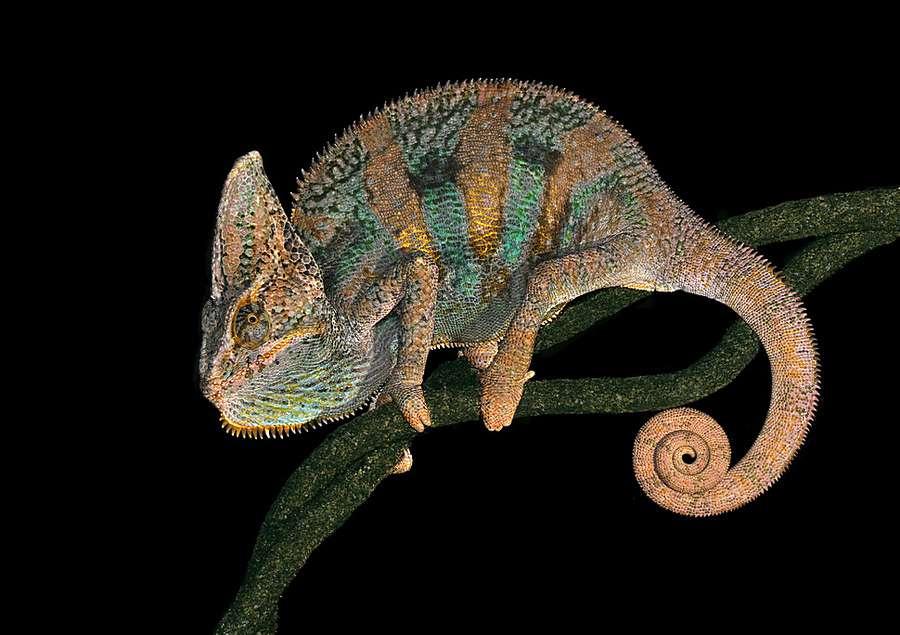 高清动物图片-Mosaic creature