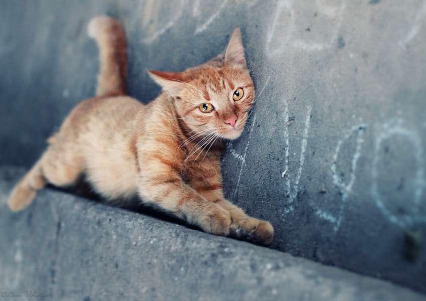 高清动物图片-On the paving