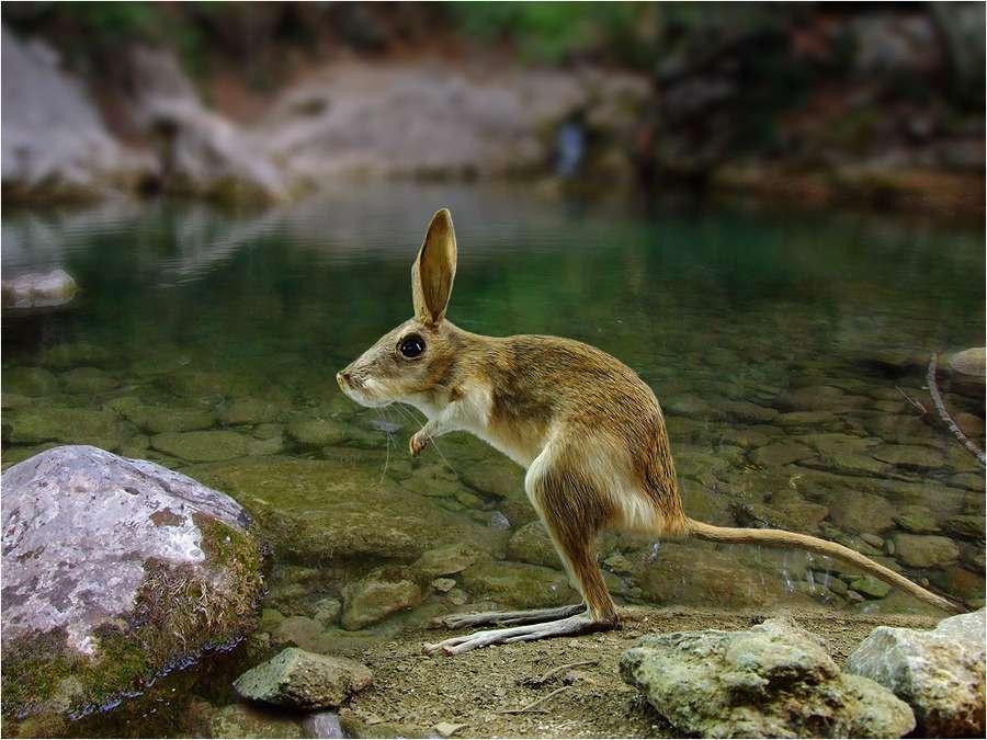高清动物图片-At the water