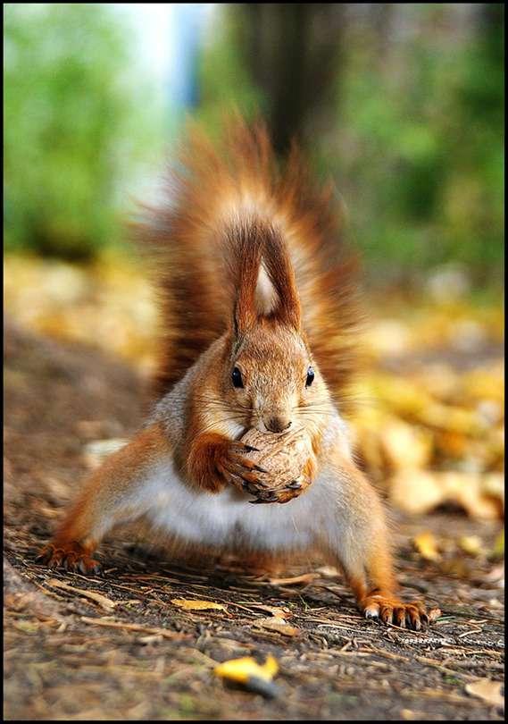 高清动物图片-My sweet nutlet