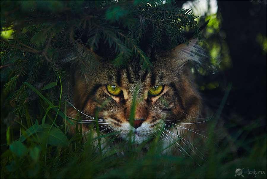 高清动物图片-Lying in ambush