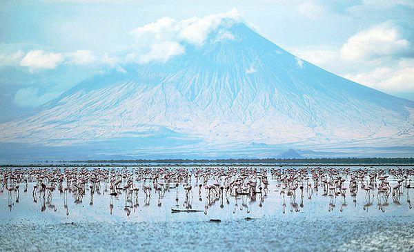 环球世界野生生物图集-纳特龙湖小红鹤群