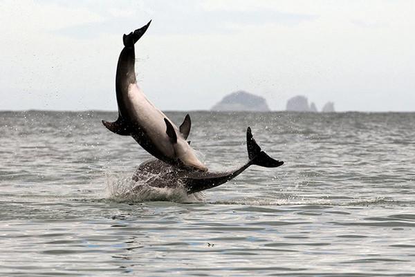 环球世界野生生物图集-海豚群
