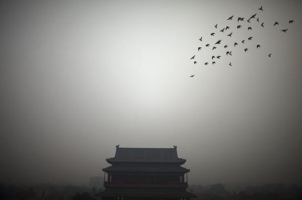 环球世界野生生物图集-北京天气