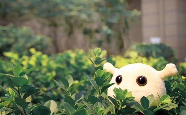 蜗牛壁纸:毛绒蜗弟公仔摄影壁纸作品1