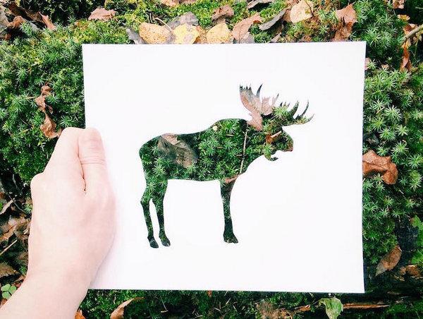NikolaiTolsty:以动物剪纸视角看自然界3