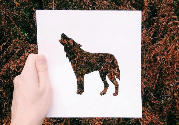 NikolaiTolsty:以动物剪纸视角看自然界5