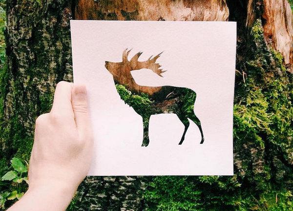 NikolaiTolsty:以动物剪纸视角看自然界8