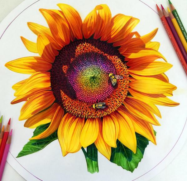 Morgan Davidson 真假难辨的彩色铅笔画4