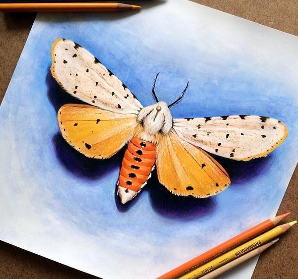 Morgan Davidson 真假难辨的彩色铅笔画7