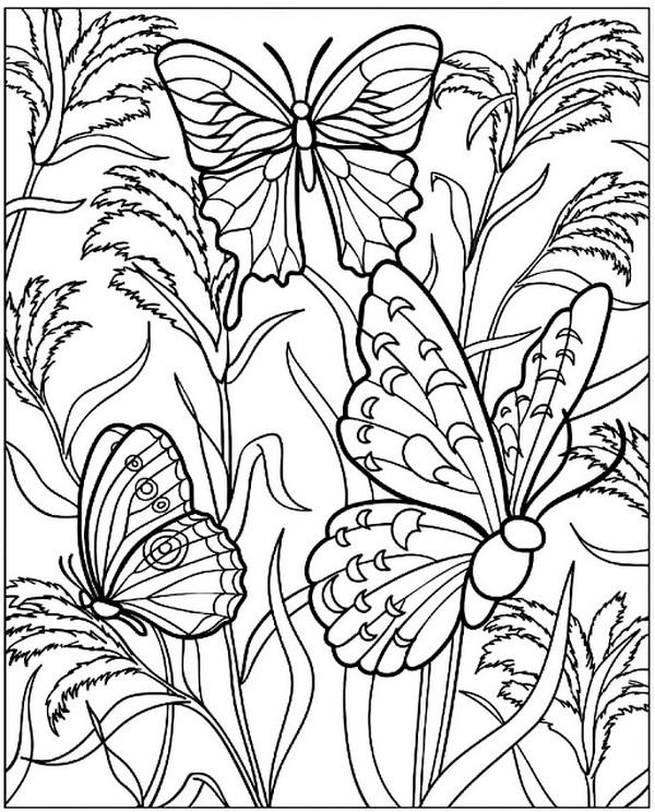 张适合儿童涂色的蝴蝶绘本6