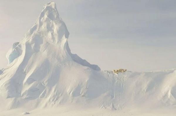 自然类二等奖《冰上的熊》加拿大摄影师JOHN ROLLINS