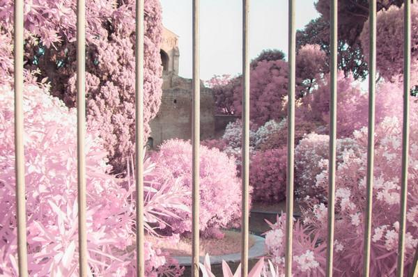 Milan Racmolnar 粉红世界红外线摄影集6