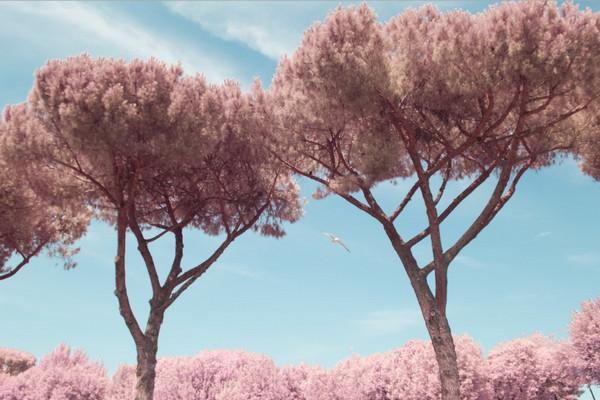 Milan Racmolnar 粉红世界红外线摄影集7