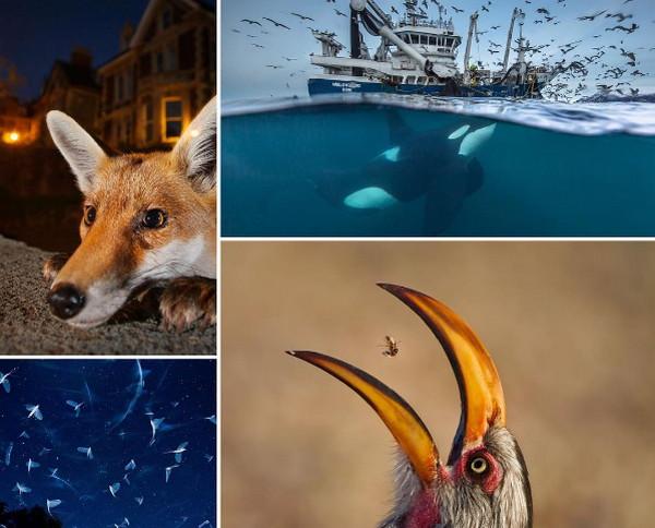 2016年野生动物摄影入围作品