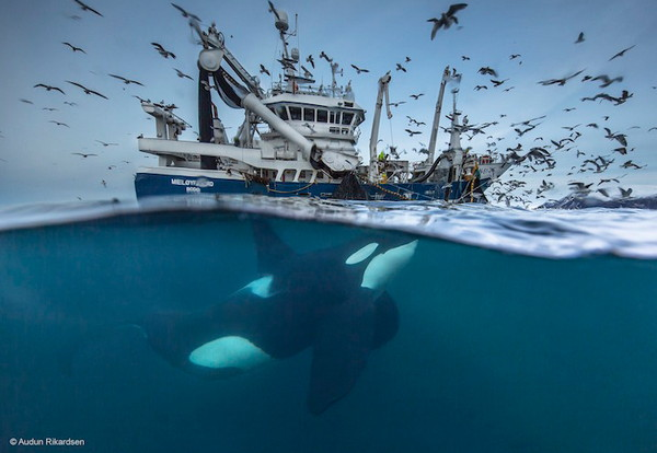 2016年野生动物摄影入围作品,鲸鱼