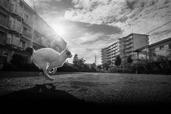 Masaaki Ito 东京流浪猫生存之路