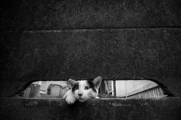 Masaaki Ito 东京流浪猫生存之路3
