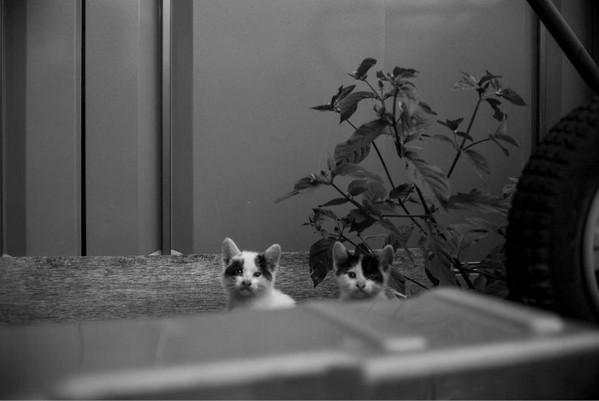 Masaaki Ito 东京流浪猫生存之路4