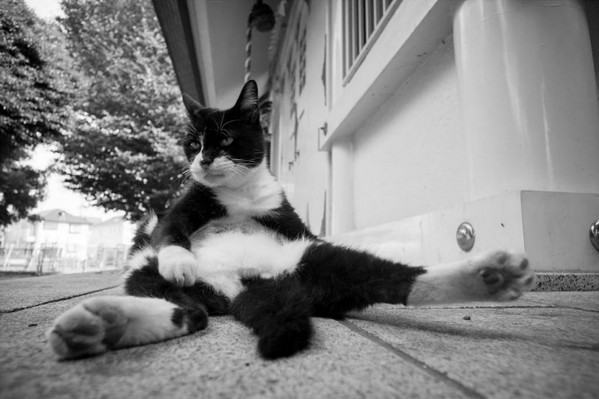 Masaaki Ito 东京流浪猫生存之路5
