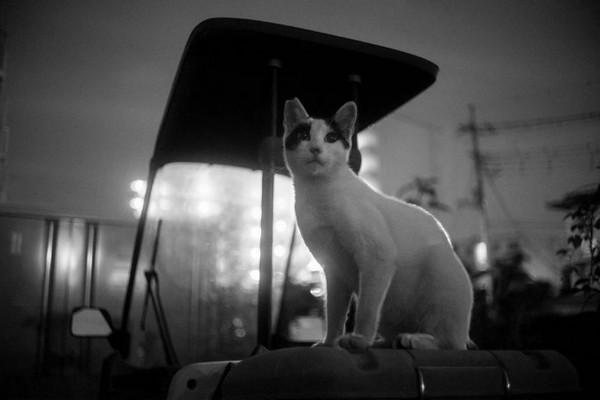 Masaaki Ito 东京流浪猫生存之路6