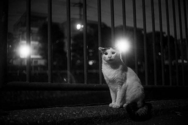 Masaaki Ito 东京流浪猫生存之路7