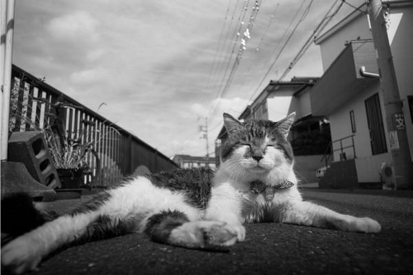 Masaaki Ito 东京流浪猫生存之路9