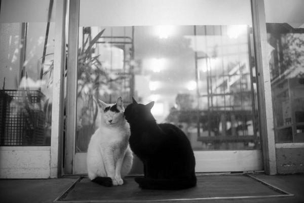 Masaaki Ito 东京流浪猫生存之路10